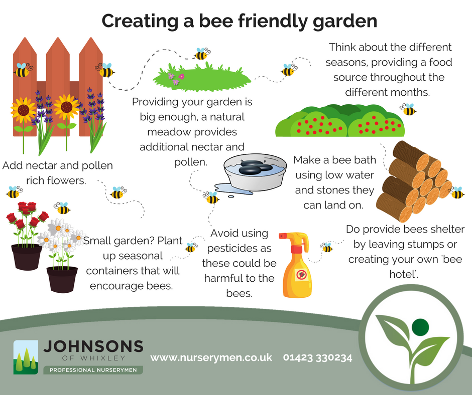How to create a bee friendly garden for summer
