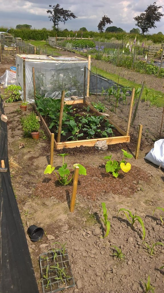 Tips for your allotment