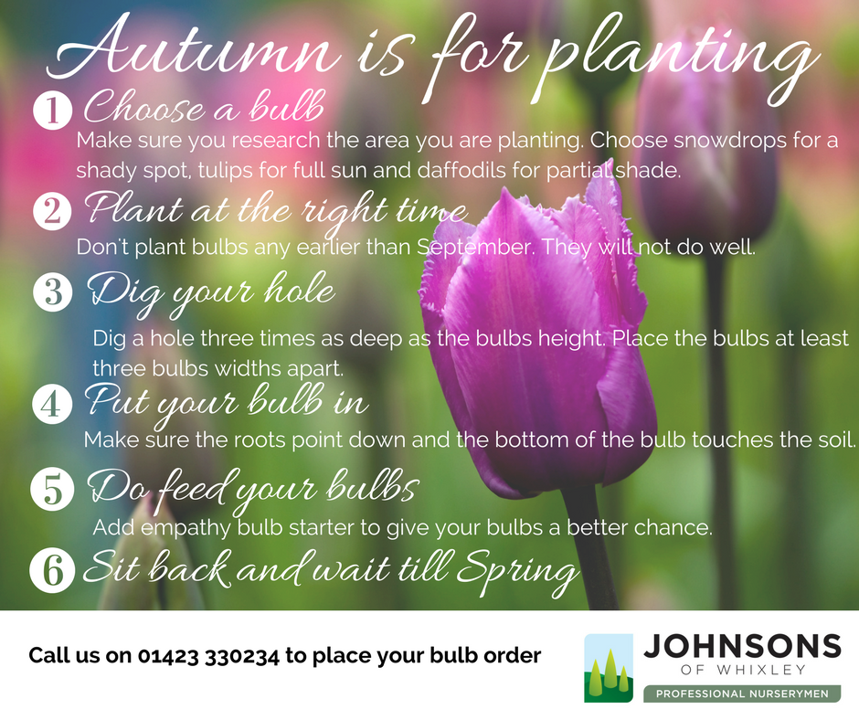 Autumn is for planting