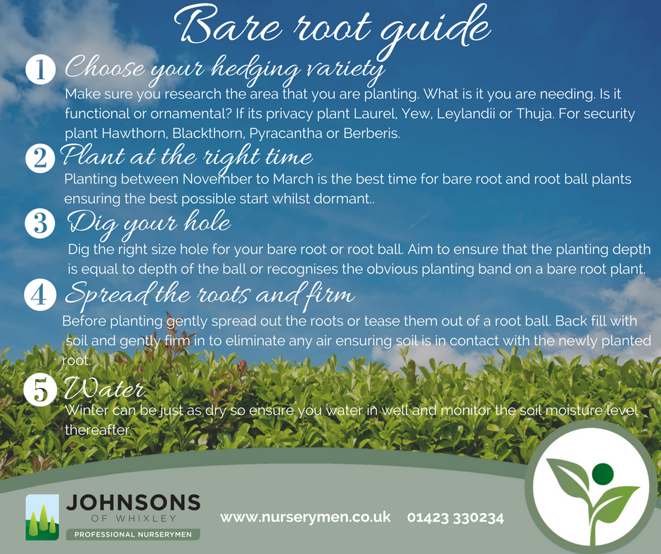 Our guide to the bare root season