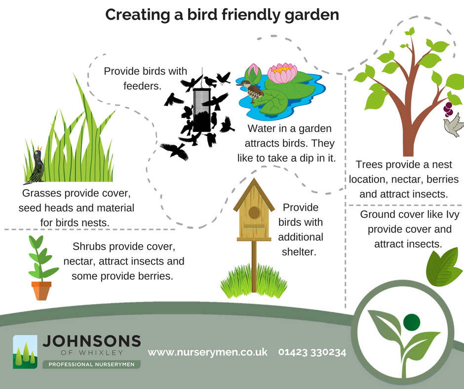 How to create a bird friendly garden