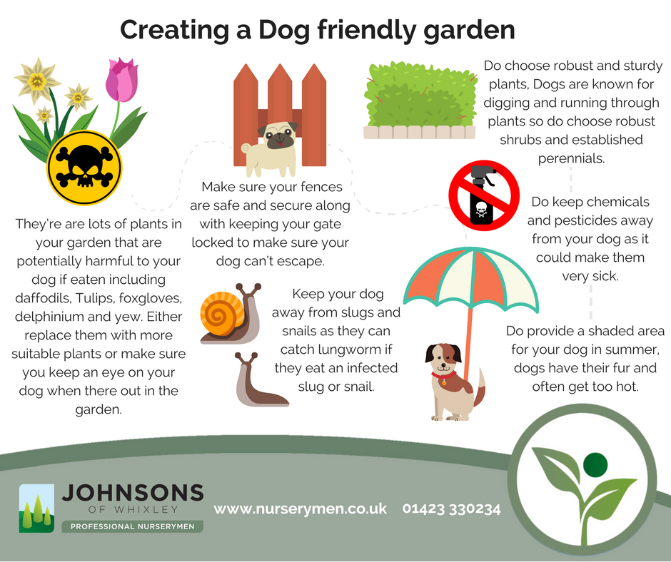 How to create a Dog friendly garden