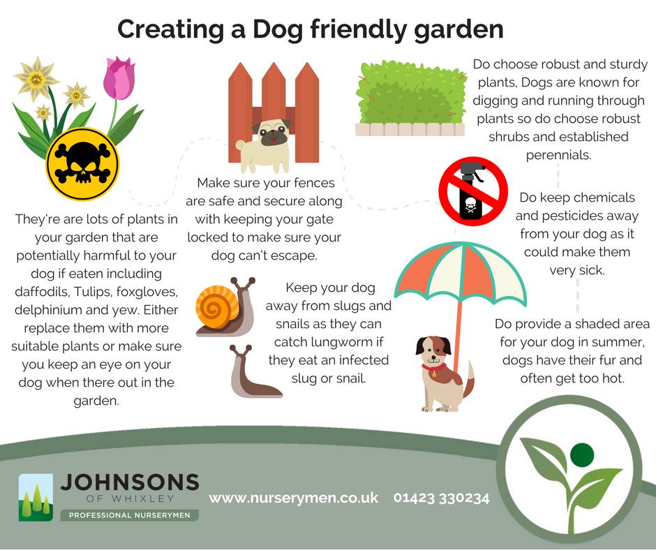How to create a Dog friendly garden