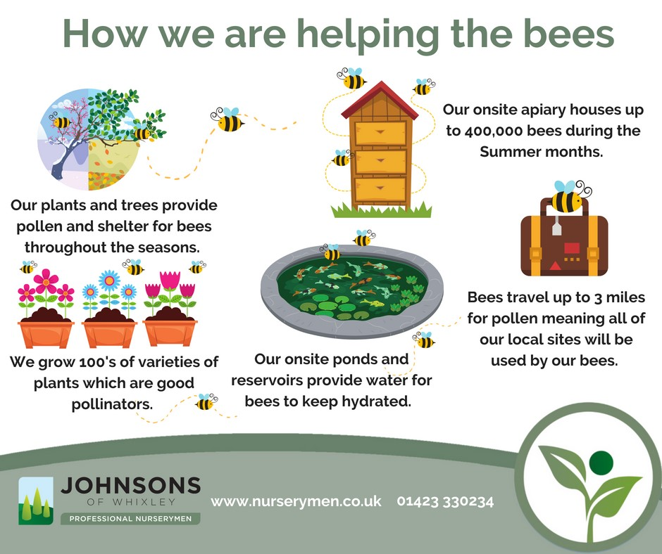 How we are helping the bees