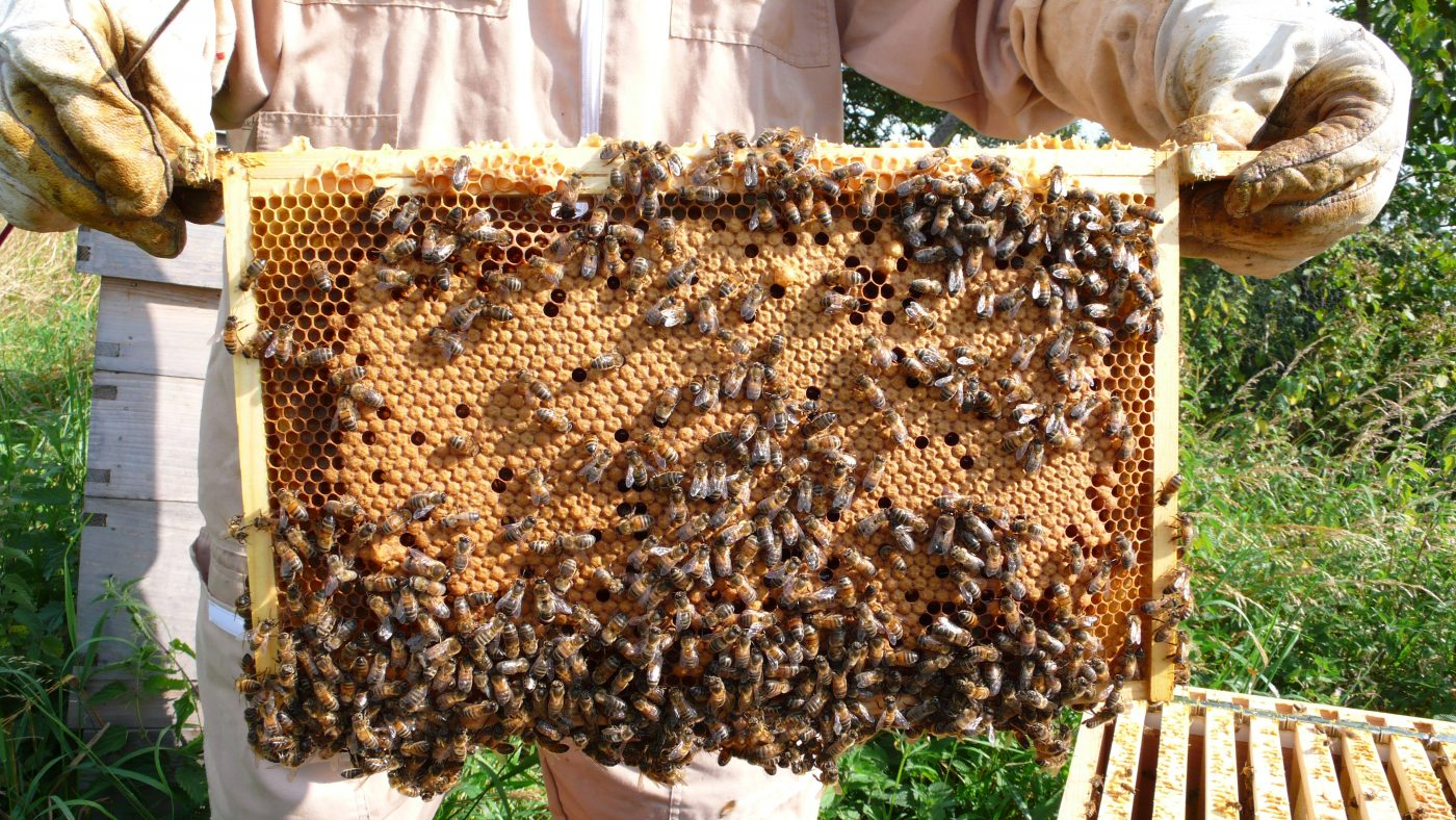 Honey is in sight as bees get to work at our nursery