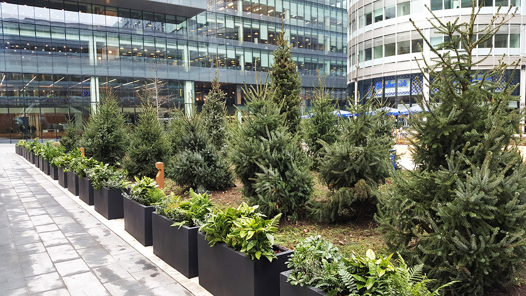 Johnsons deliver Christmas trees to Spinningfields