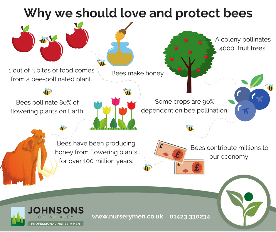 Six reasons why you should love and protect bees