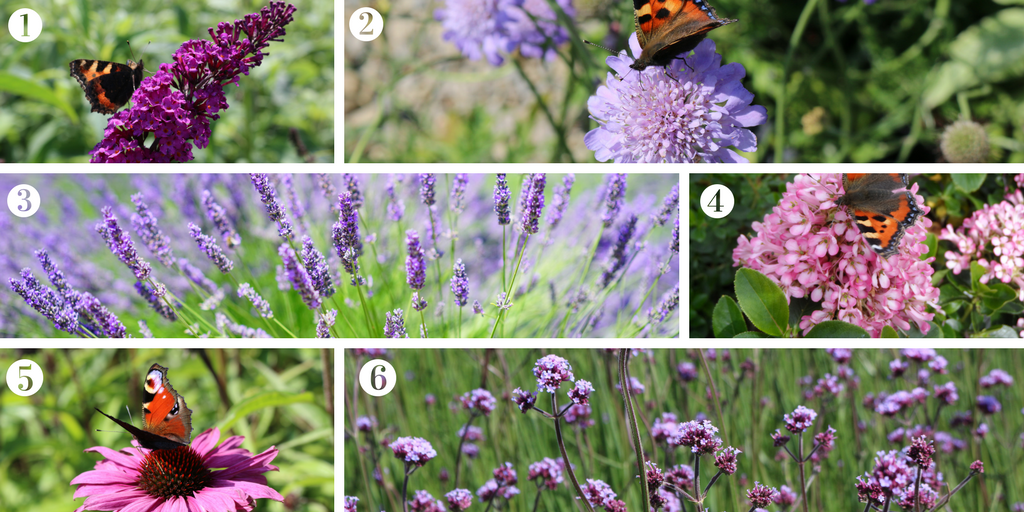 Plants to attract butterflies to your garden