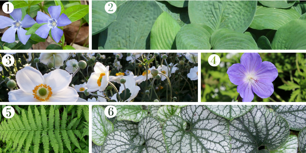 Six shade loving plants