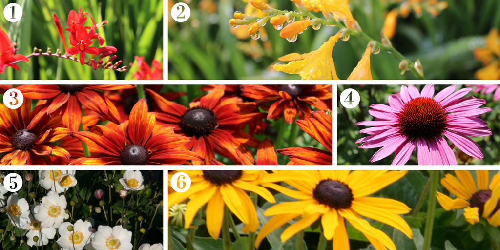 Six must have late-flowering perennials