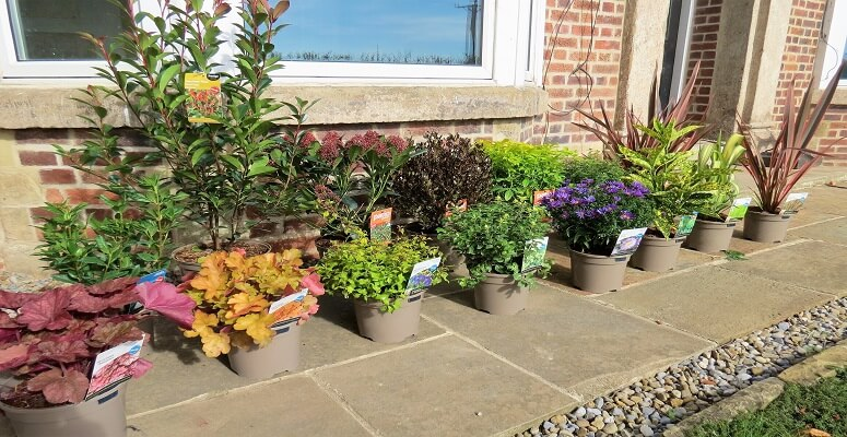 Johnsons trial plant pots aimed at reducing landfill