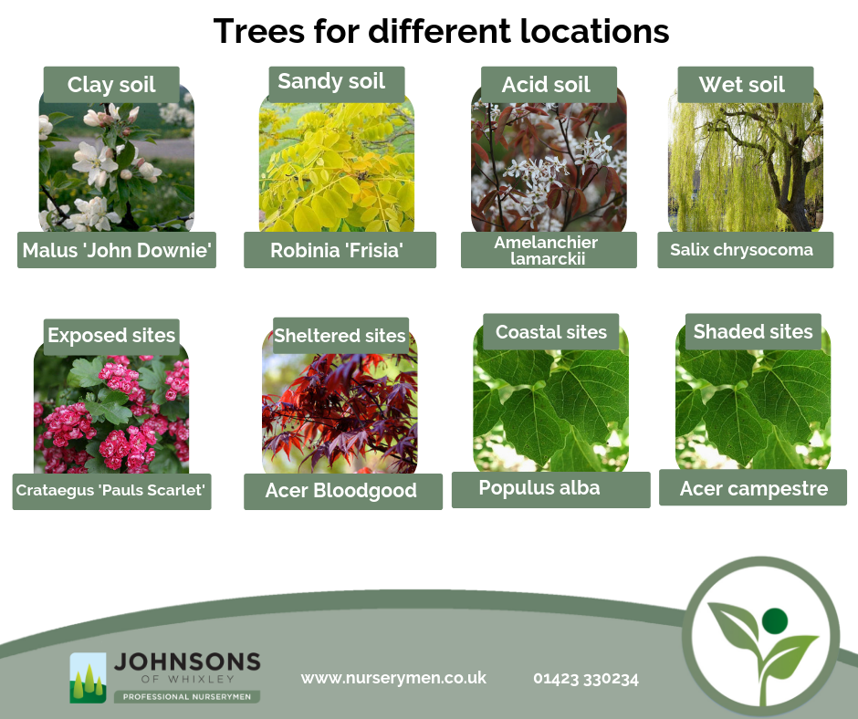 Johnsons guide to trees for different locations