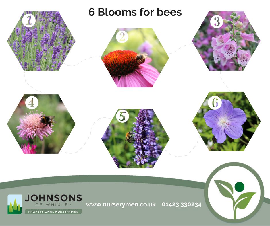 Want to attract bee's to your garden? Here's six great blooms