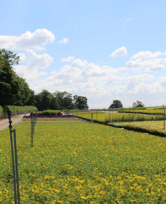 Landscape | Johnsons of Whixley Commercial