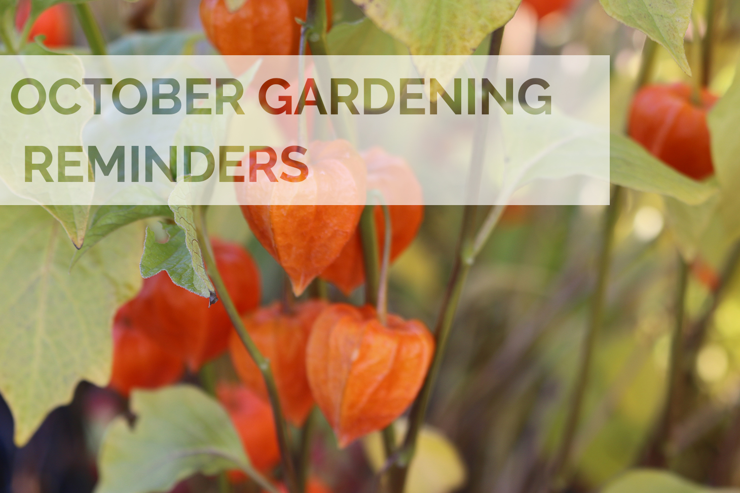 Jobs to do in the garden this October