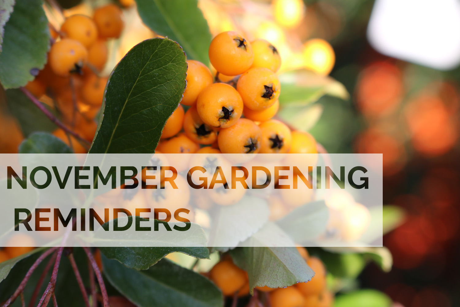 Jobs to do in the garden this November
