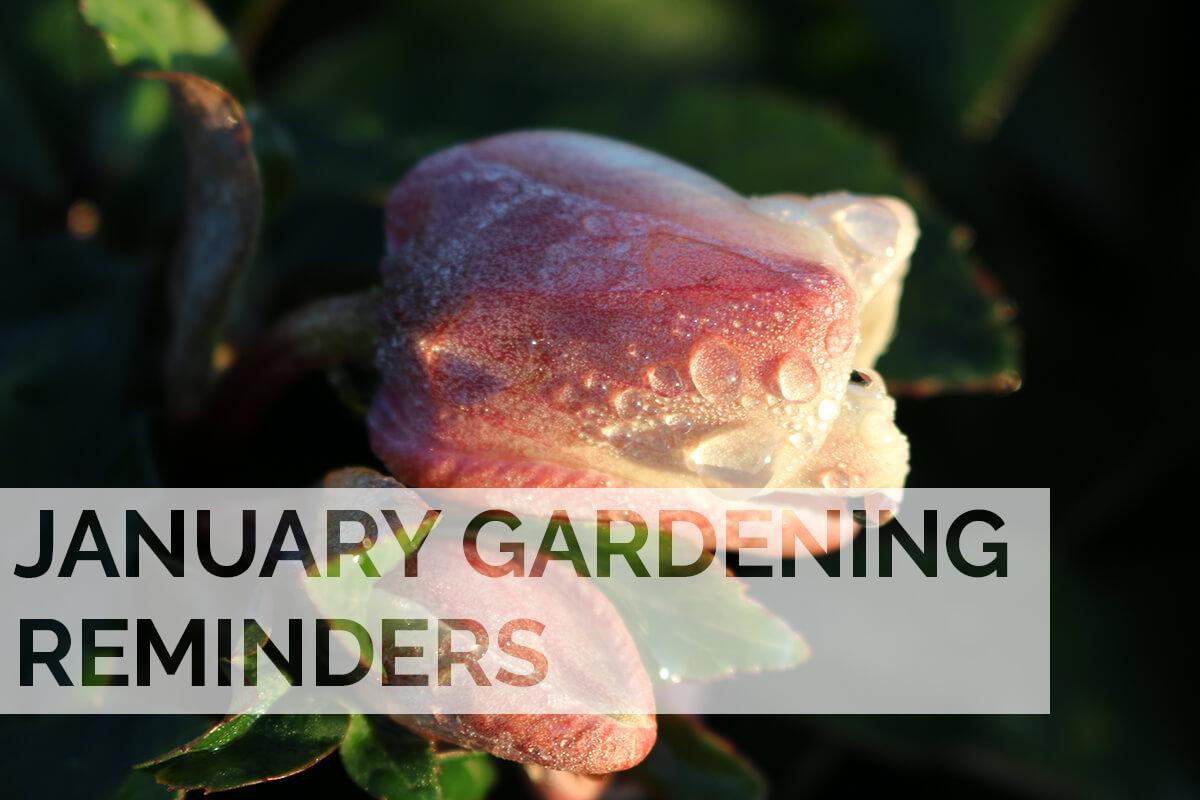 January 2020 Gardening Reminders