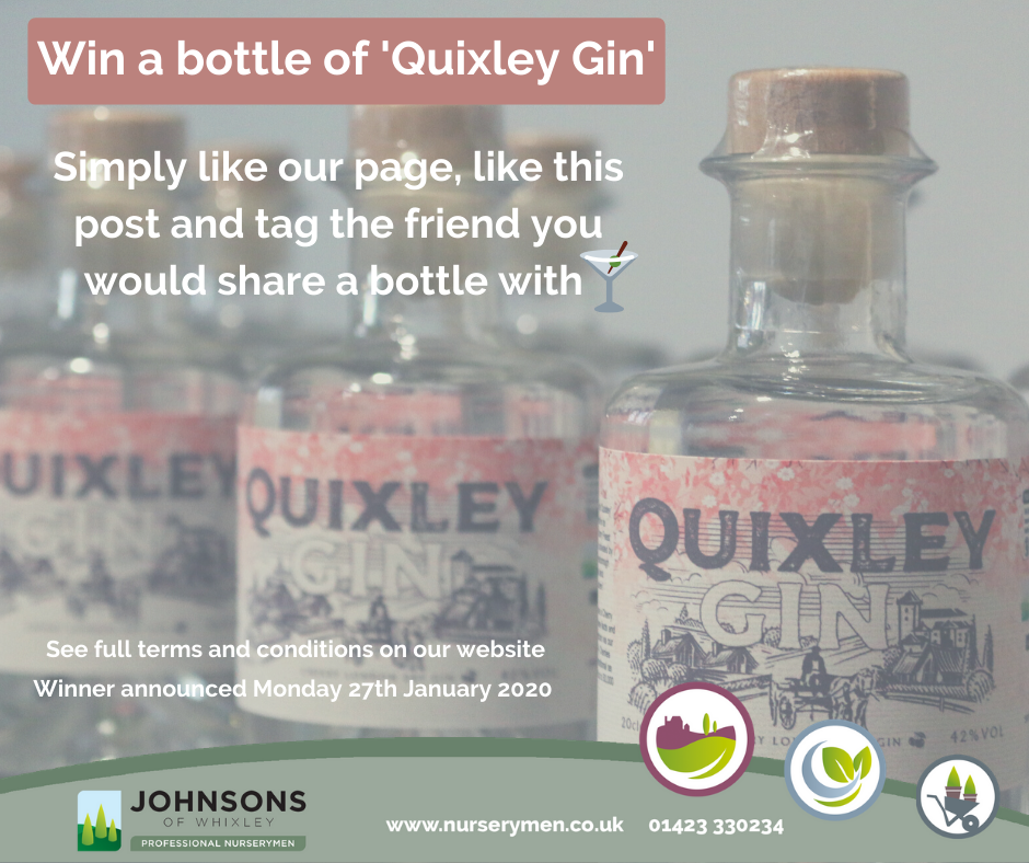 'Ginuary' giveaway