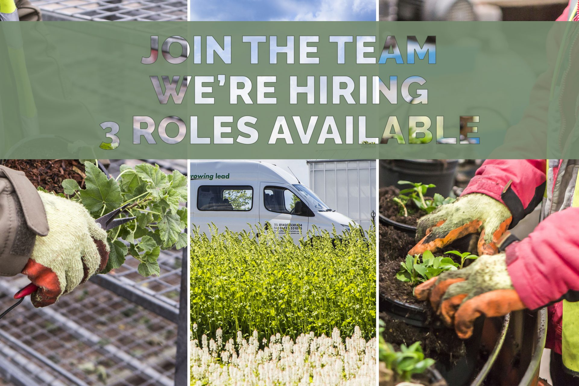 Join the team we're hiring - 3 roles available