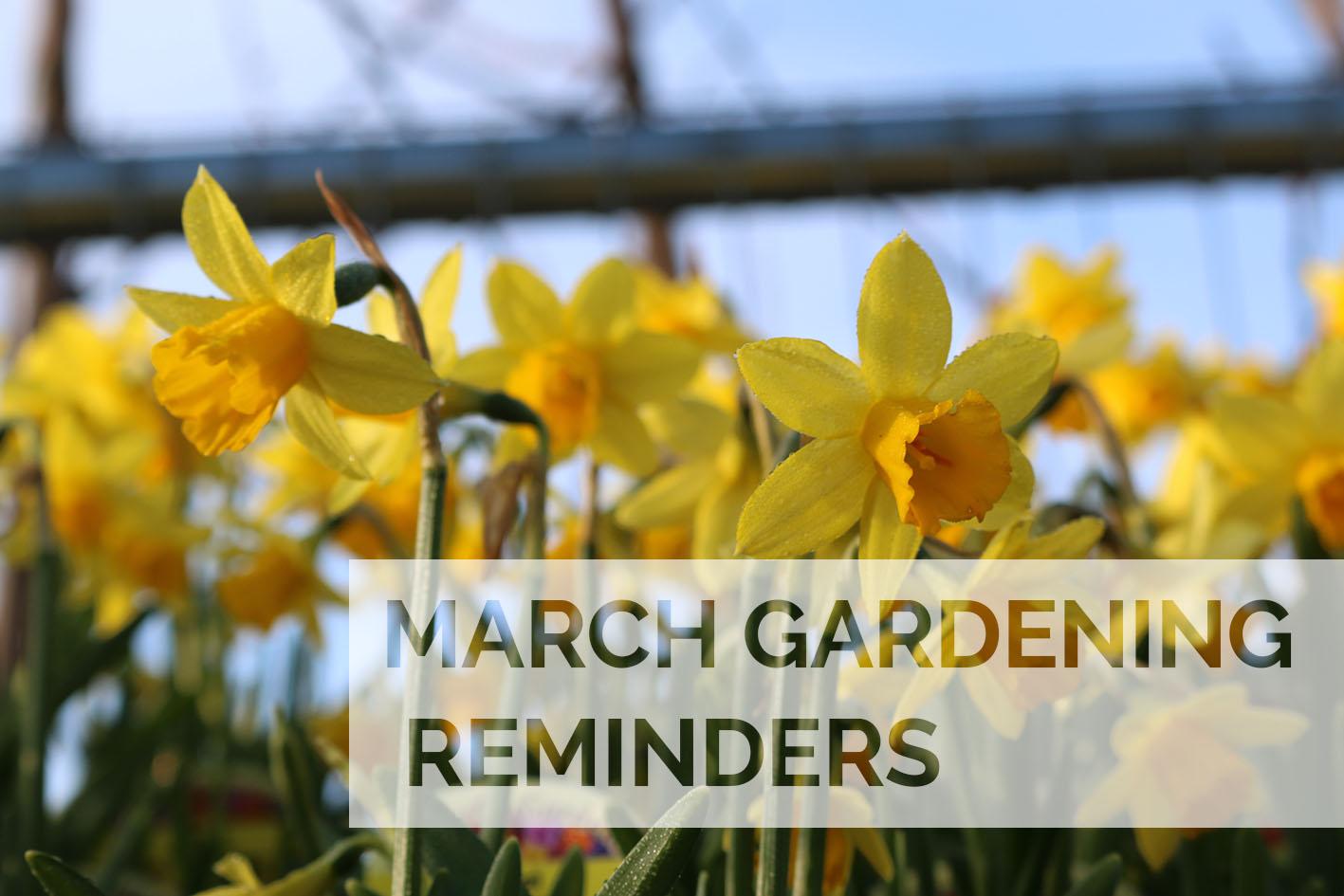 March 2020 Gardening Reminders