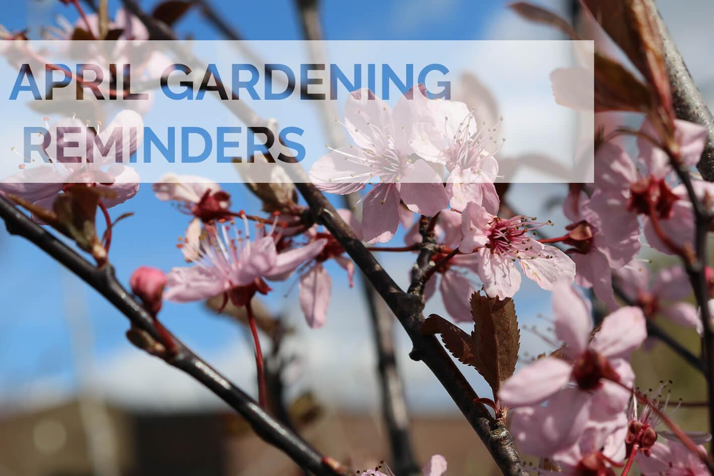 April 2020 Gardening Reminders