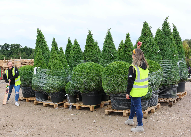Topiary garden supply for England cricket hero