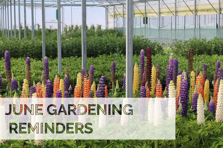 June 2020 Gardening Reminders