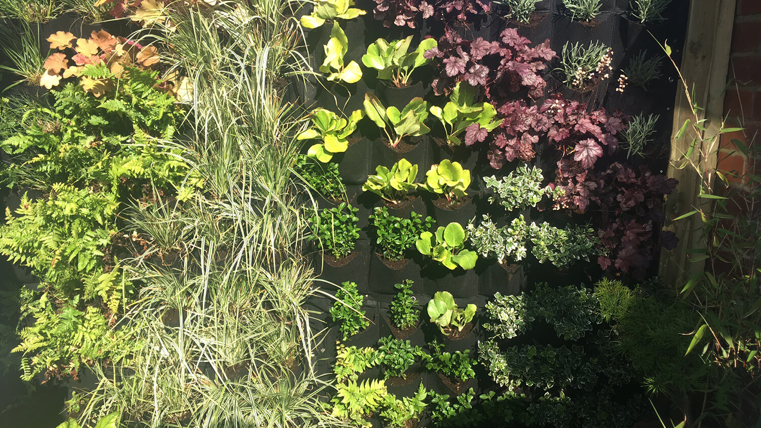 Creating a vertical Living Wall
