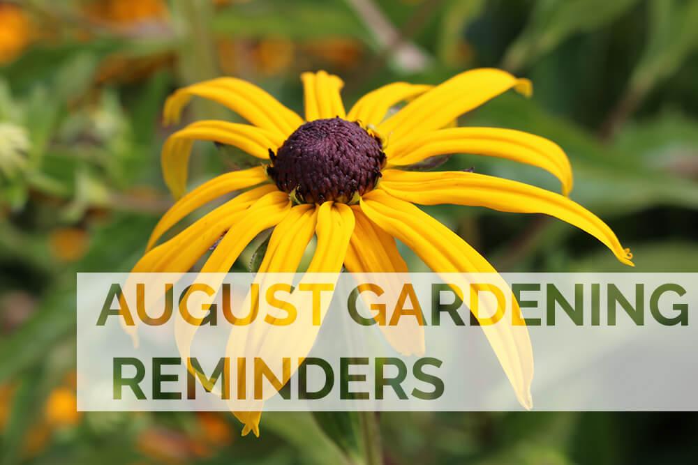 August 2020 Gardening Reminders