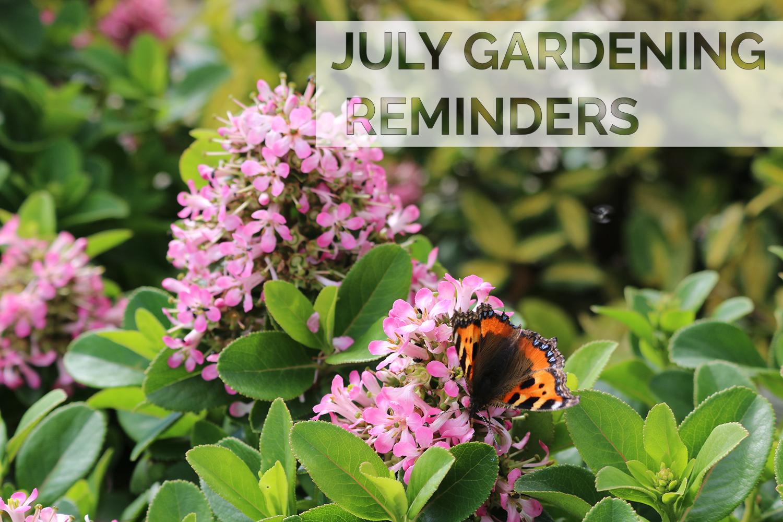 July 2020 Gardening Reminders