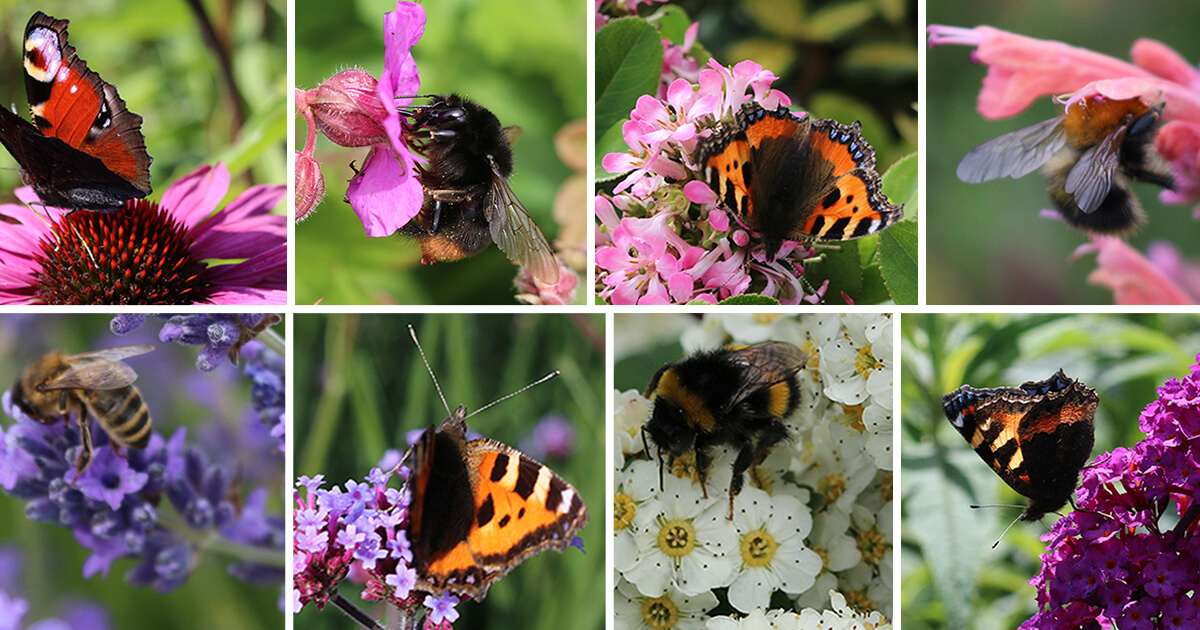 Pollinator-friendly shrubs and herbaceous for spring and summer