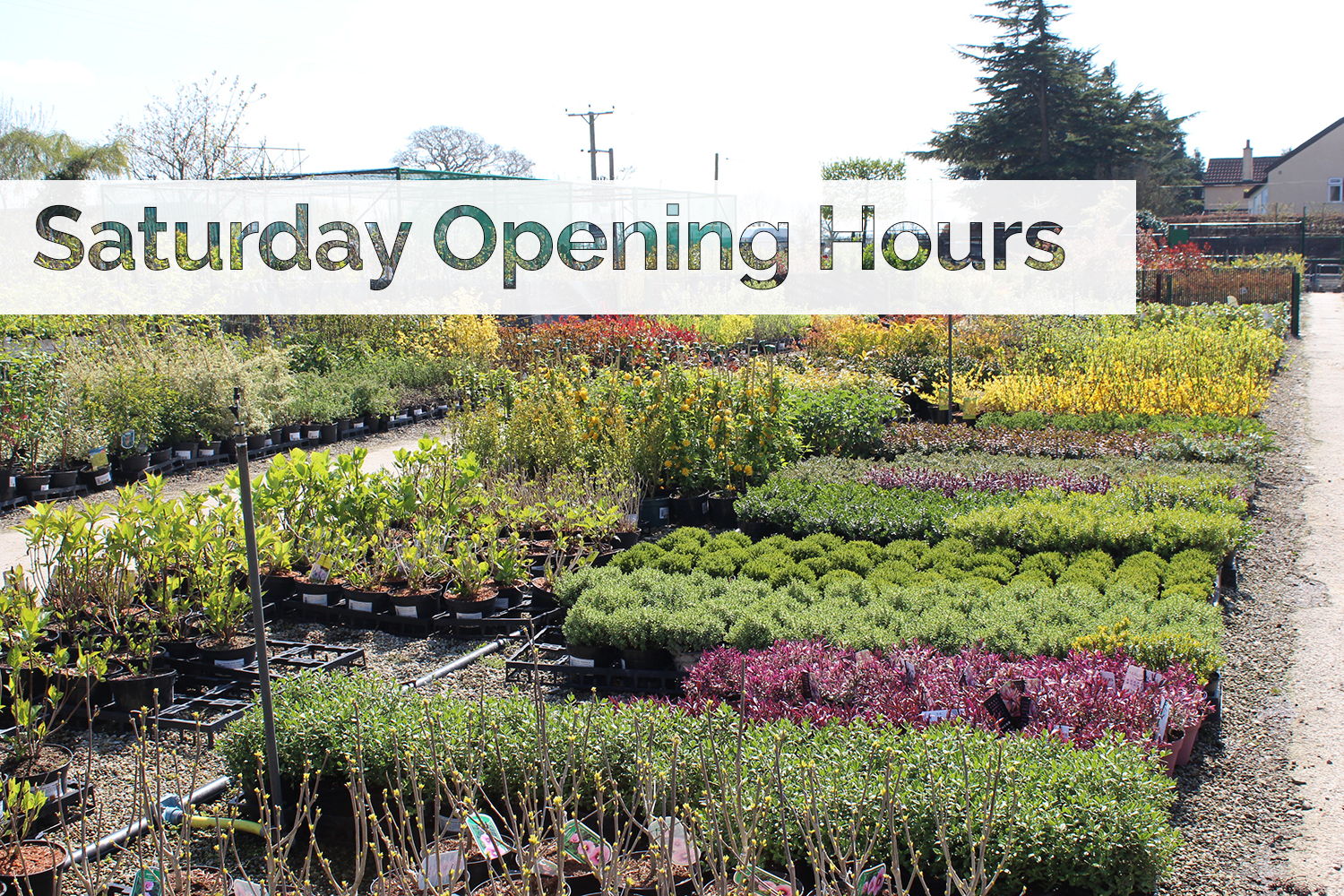 New Cash & Carry Saturday Opening Hours