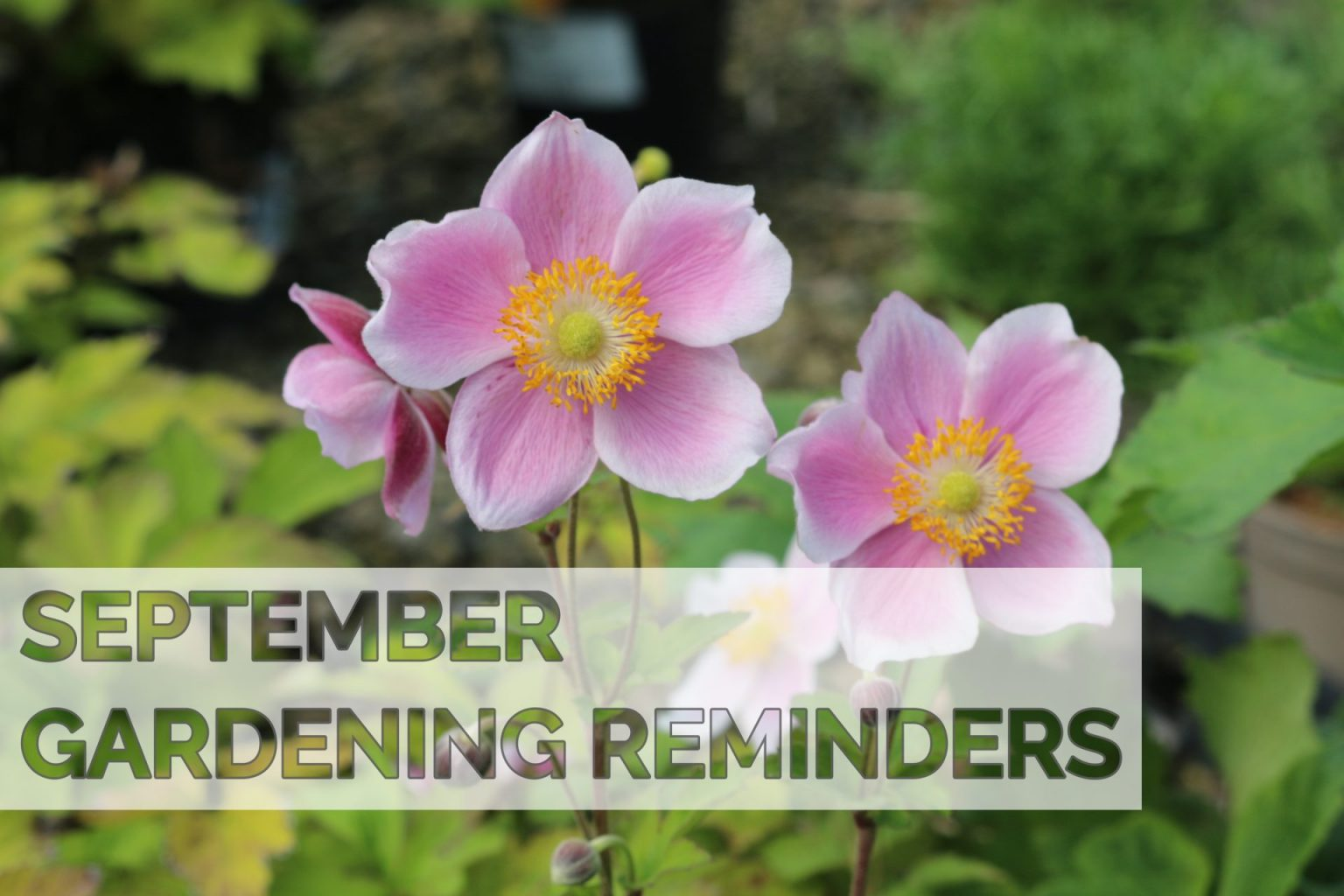 September 2020 Gardening Reminders