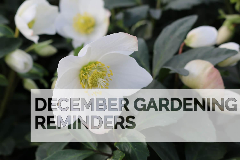 December 2020 Gardening Reminders