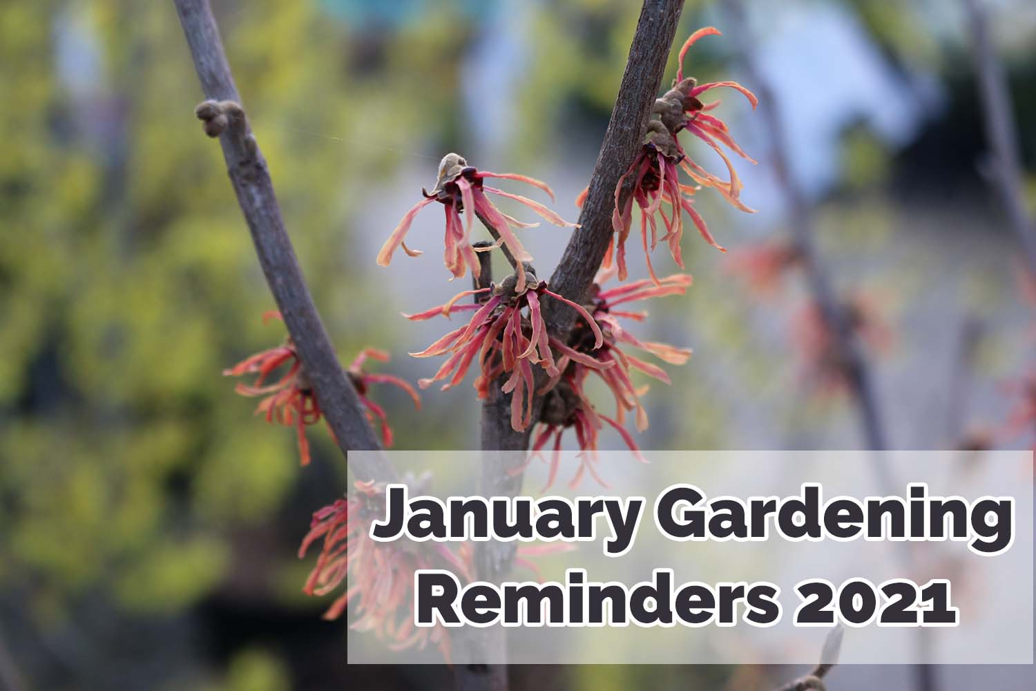 What to do in the garden this January - 2021