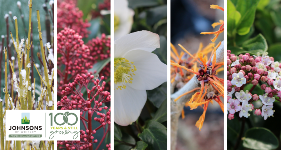 Winter Interest Plants - five of our favourites