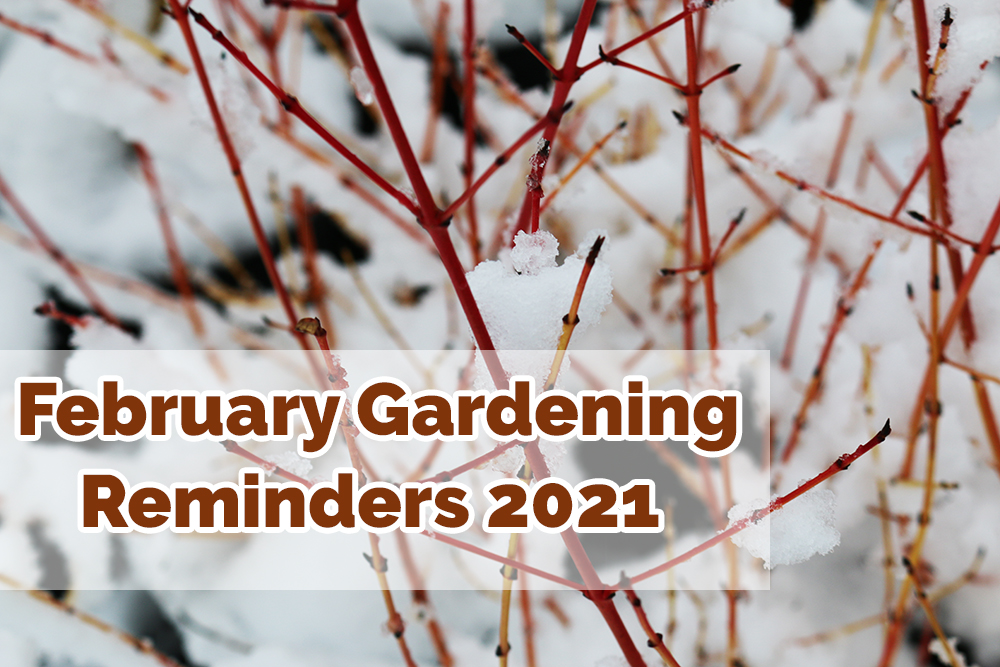 What to do in the garden during February 2021