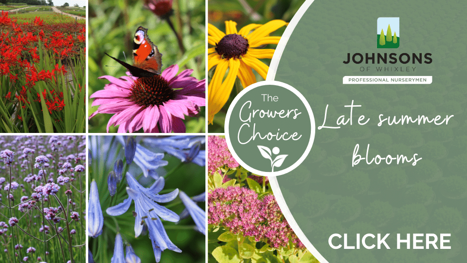 The Growers Choice: Late summer blooms