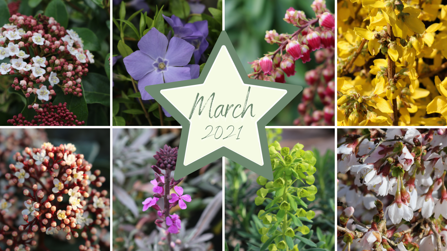 Plants that look good this March
