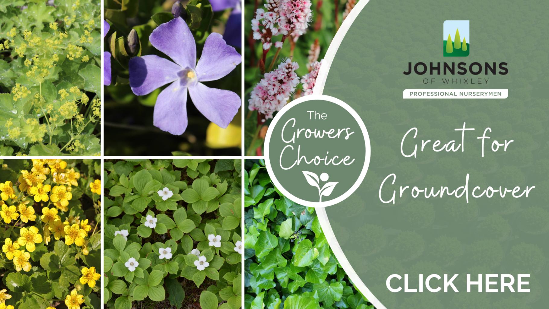 The Growers Choice: Ground cover plants