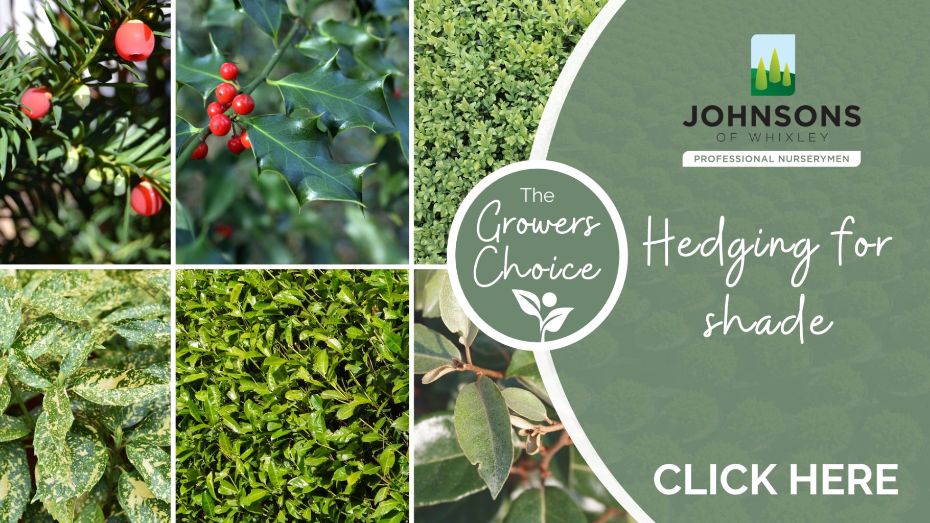 The Growers Choice: Hedging for shade