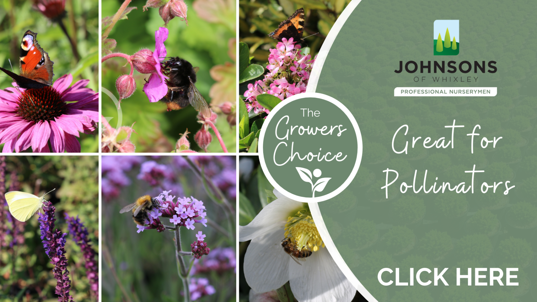 The Growers Choice: Plants and Trees for pollinators