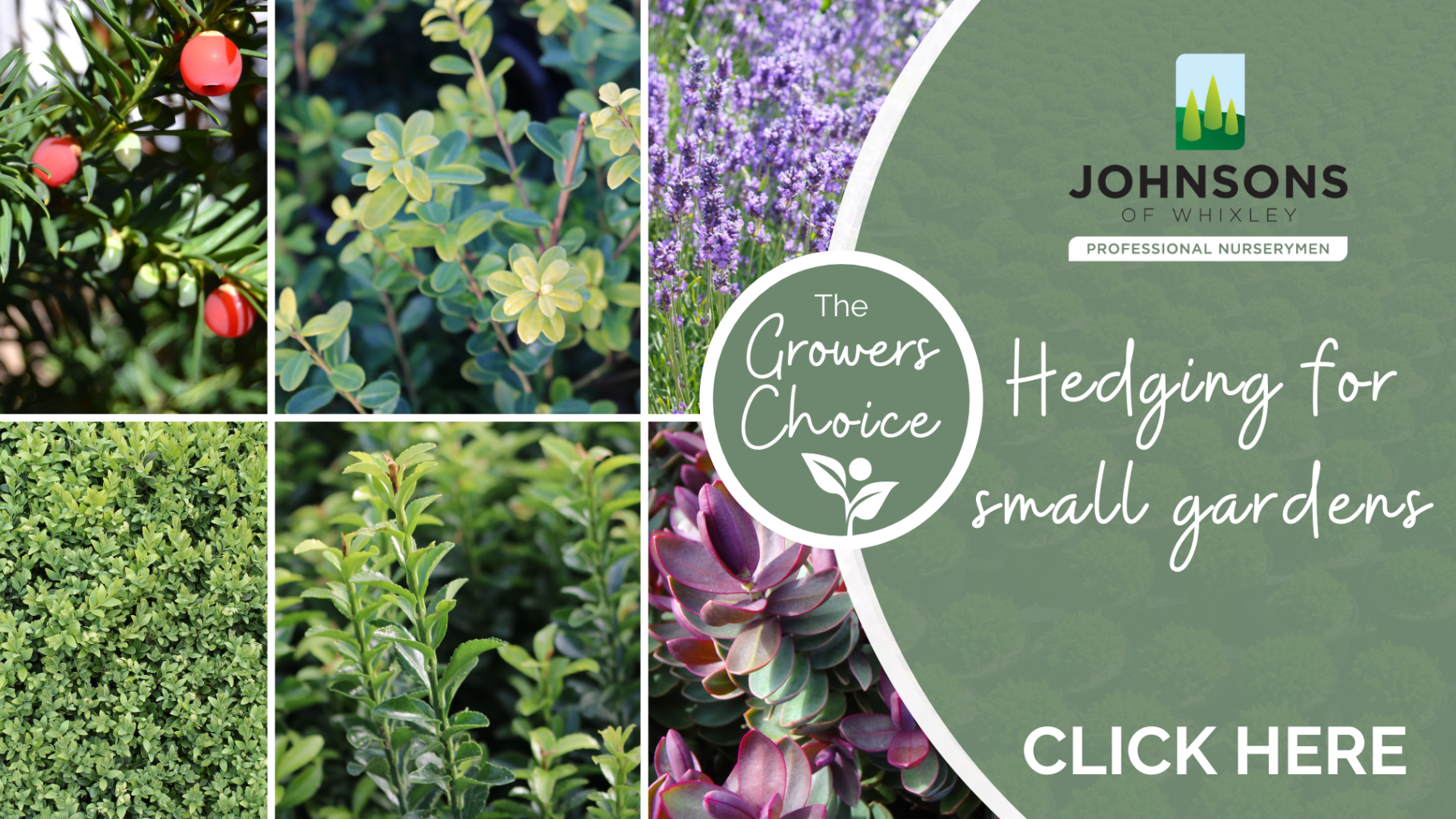 The Growers Choice: Hedging for small gardens