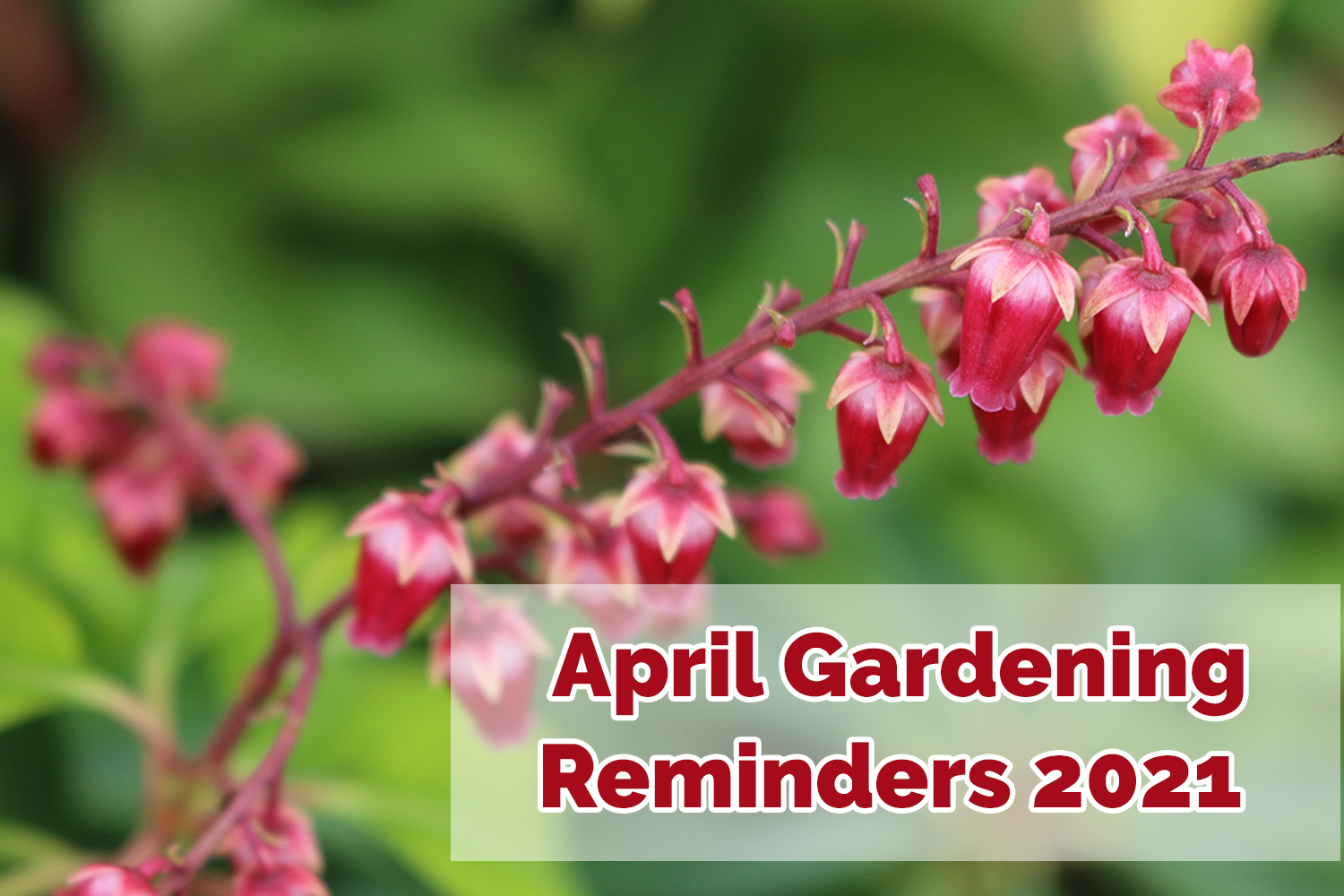 What to do in the garden during April