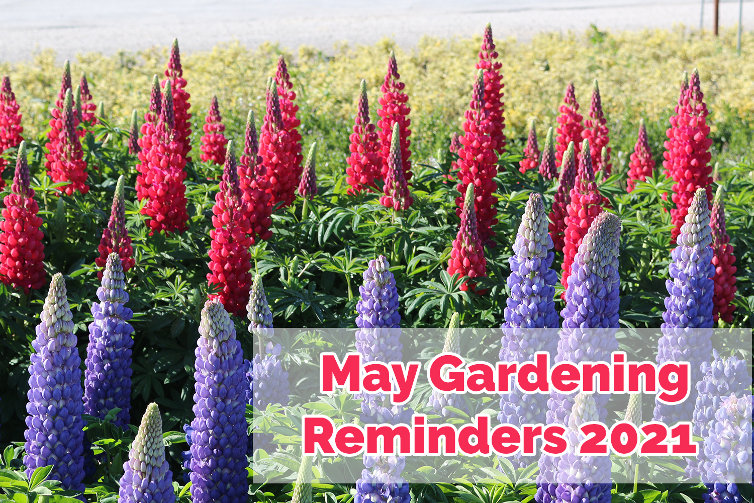 What to do in the garden during May