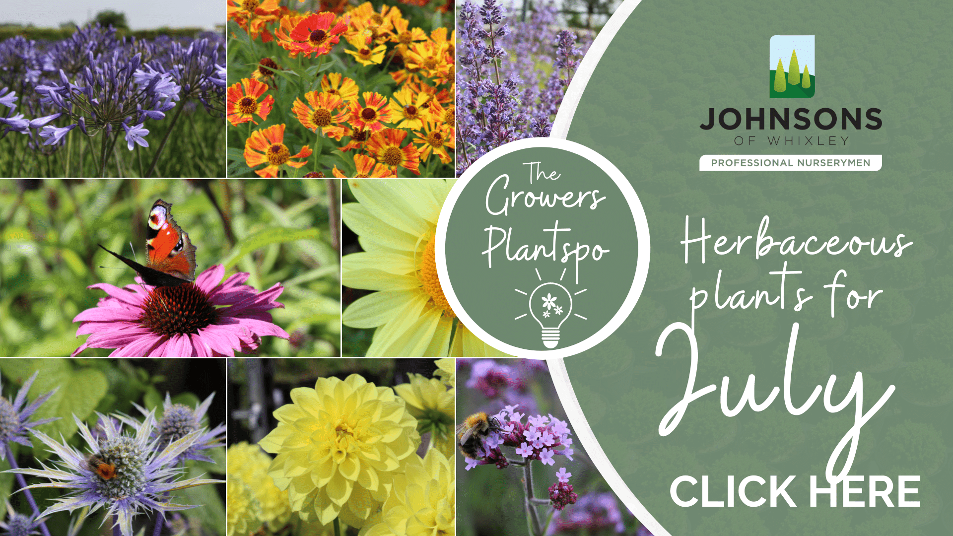 The Growers Plantspo - July Herbaceous