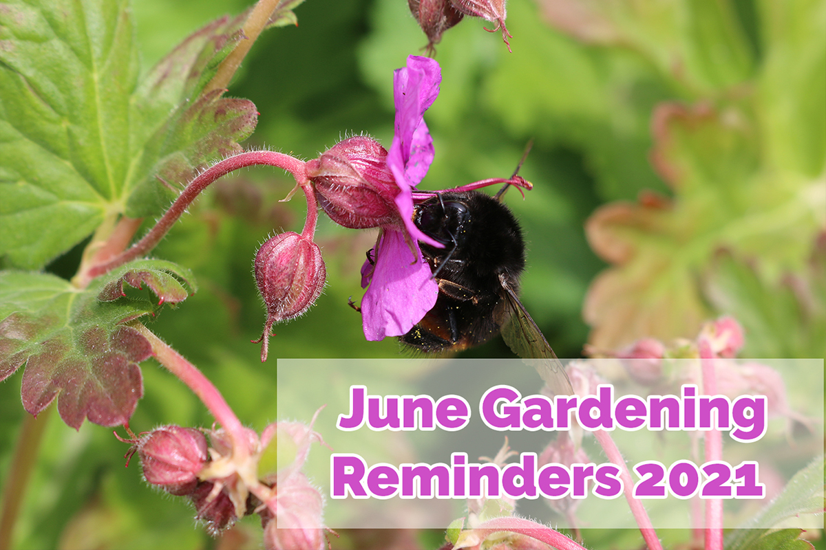 What to do in the garden this June