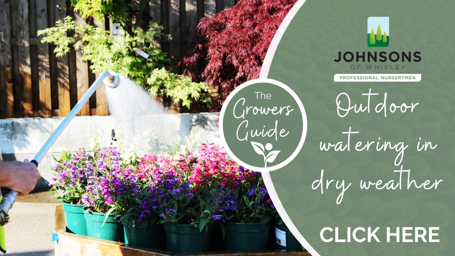 The Growers Guide - Watering in dry weather