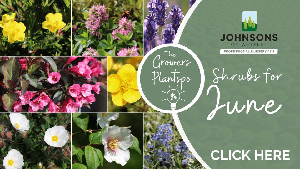 The Growers Plantspo - June Shrubs