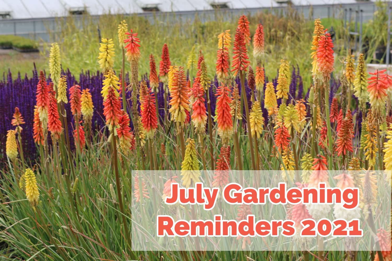 July Gardening Reminders 2021